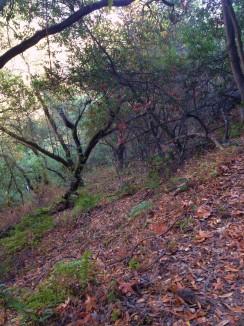 Palomares Creek Valley, Castro Valley, CA